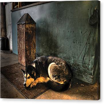Canine Sentry Canvas Print by Don Wolf
