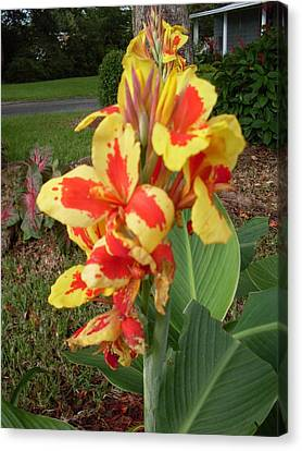 Canna Lily 2 Canvas Print by Warren Thompson