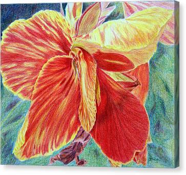 Canna Lily Canvas Print by Tina Storey