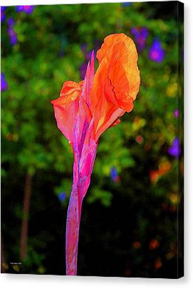 Canna Lily With Althea Canvas Print by Fred Jinkins