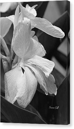 Cannas Amarillo In Black And White Canvas Print by Suzanne Gaff