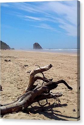 Cannon Beach Driftwood Canvas Print by Lori Seaman
