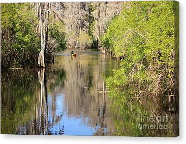 Canoeing On The Hillsborough River Canvas Print by Carol Groenen