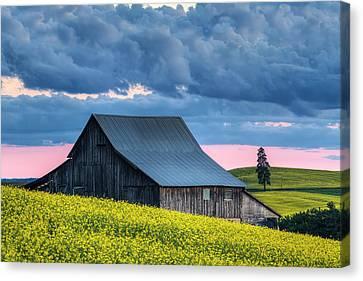 Canola Sunset Canvas Print by Mark Kiver