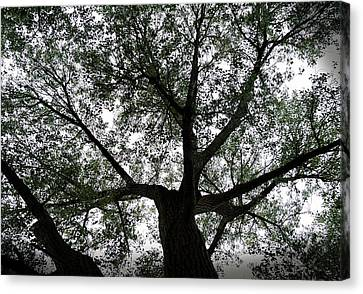 Canopy Of Life Canvas Print by Steven Milner