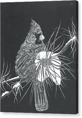 Cardinal Scratch Board Canvas Print by Darren Cannell