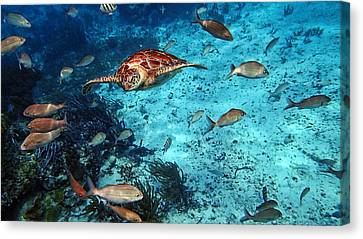 Caribbean Blue_10 Canvas Print by Wendy White