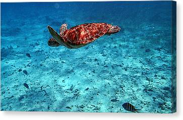 Caribbean Blue_11 Canvas Print by Wendy White