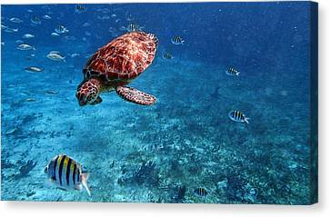 Caribbean Blue_13 Canvas Print by Wendy White