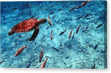 Caribbean Blue_4 Canvas Print by Wendy White