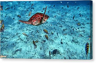 Caribbean Blue_6 Canvas Print by Wendy White