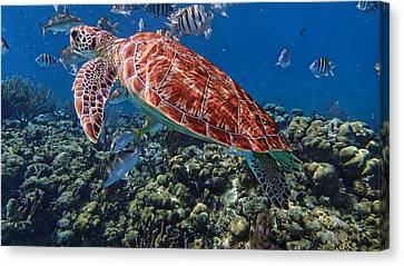 Caribbean Blue_7 Canvas Print by Wendy White