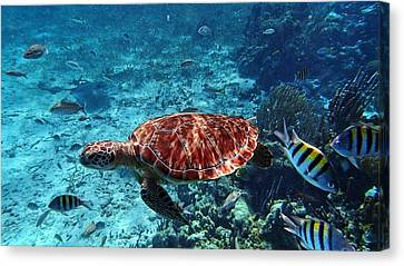 Caribbean Blue_8 Canvas Print by Wendy White
