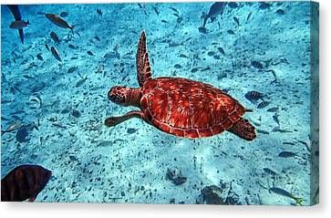 Caribbean Blue_9 Canvas Print by Wendy White