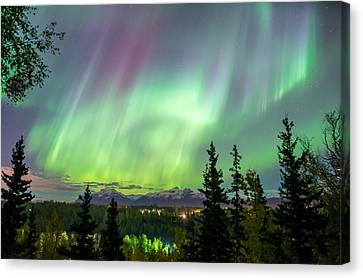 Caribou Skies Canvas Print by Ron Day