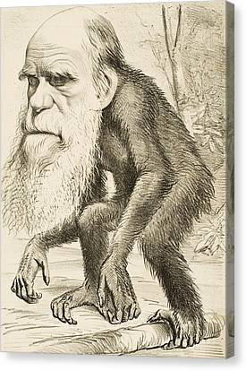Caricature Of Charles Darwin Canvas Print by English School