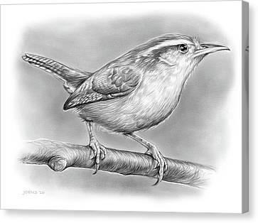 Carolina Wren Canvas Print by Greg Joens