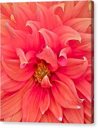 Carrie's Sister Canvas Print by Gwyn Newcombe