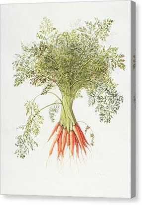 Carrots Canvas Print by Margaret Ann Eden