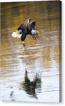 Carrying Dinner Canvas Print by Mike Dawson