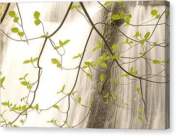 Cascade Falls Rushes Down  Cascade Canvas Print by Phil Schermeister