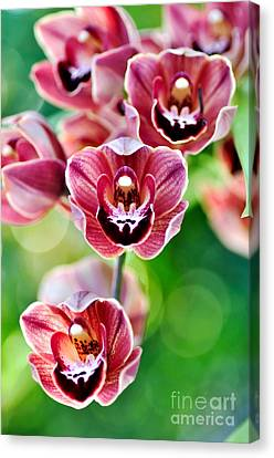 Cascading Miniature Orchids Canvas Print by Kaye Menner