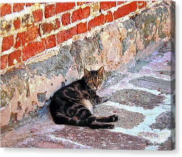 Cat Against Stone Canvas Print by Susan Savad