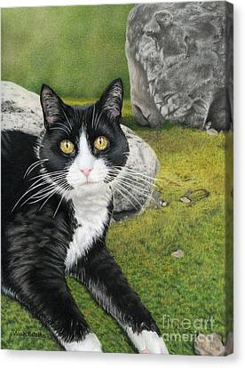 Cat In A Rock Garden Canvas Print by Sarah Batalka