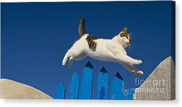Cat Jumping A Gate Canvas Print by Jean-Louis Klein & Marie-Luce Hubert
