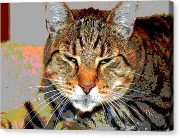Cat Nap Love Canvas Print by Dianne Cowen