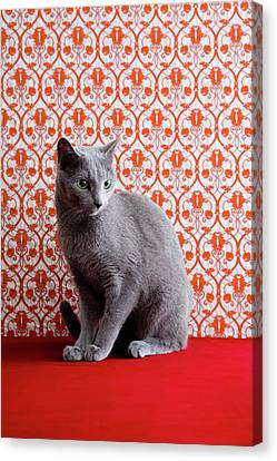 Cat (russian Blue) And Wallpaper Background Canvas Print by Ultra.f
