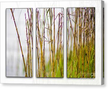 Cat Tails By Darrell Hutto Canvas Print by J Darrell Hutto