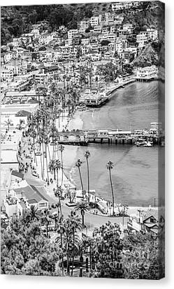 Catalina Island Aerial Black And White Photo Canvas Print by Paul Velgos
