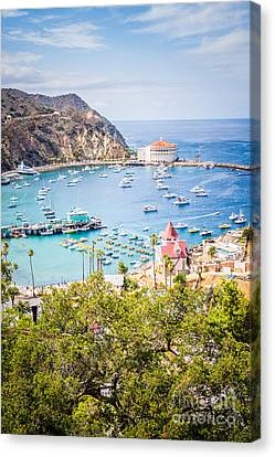 Catalina Island Avalon Bay Vertical Photo Canvas Print by Paul Velgos