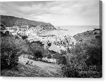 Catalina Island Avalon California Black And White Photo Canvas Print by Paul Velgos