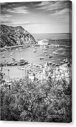 Catalina Island Vertical Black And White Photo Canvas Print by Paul Velgos