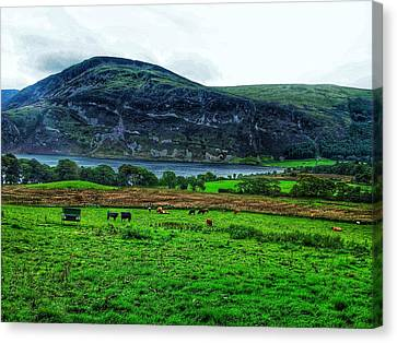 Cattle Grazing At Buttermere Canvas Print by Joan-Violet Stretch