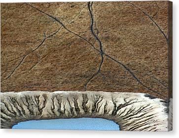 Cattle Tracks Canvas Print by Tim Nichols