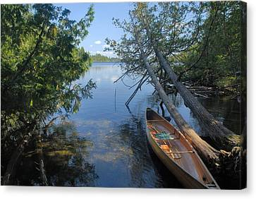 Cedar Strip Canoe And Cedars At Hanson Lake Canvas Print by Larry Ricker