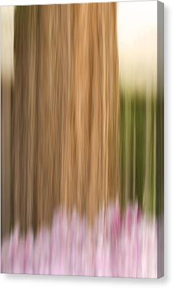 Cedar Tree With Pink Flowers Canvas Print by Cheryl Day