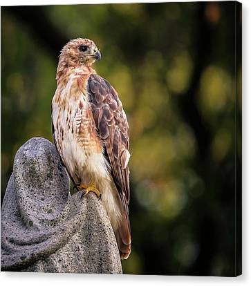 Cemetery Hawk Canvas Print by James McGreehan