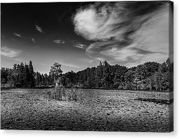 Center Cypress - Bw Canvas Print by Marvin Spates