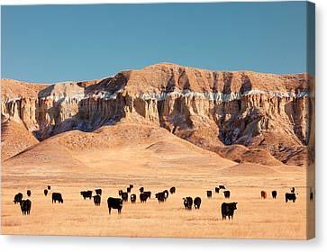 Chalk Cliffs Canvas Print by Todd Klassy