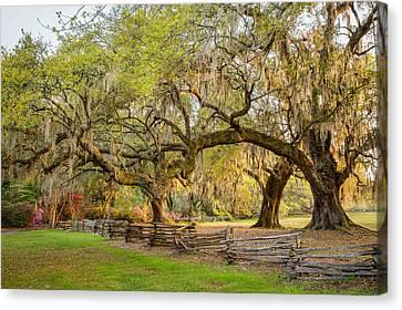 Charleston South Carolina Live Oaks Alongsplit Rail Fence Magnolia Plantation Canvas Print by Bill Swindaman