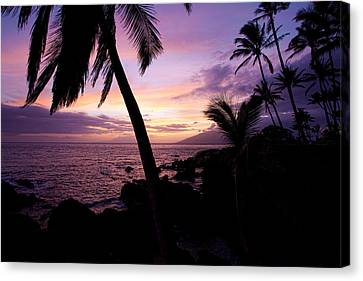 Charly Young Sunset Canvas Print by James Roemmling