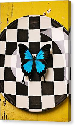 Checker Plate And Blue Butterfly Canvas Print by Garry Gay