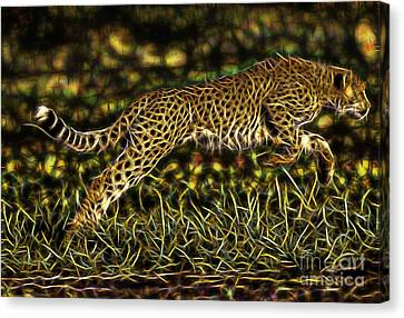 Cheetah Collection Canvas Print by Marvin Blaine