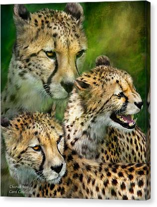 Cheetah Moods Canvas Print by Carol Cavalaris
