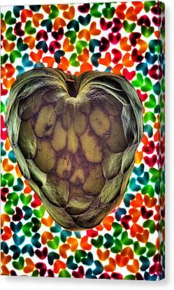Cherimoya Heart Canvas Print by Robert Storost