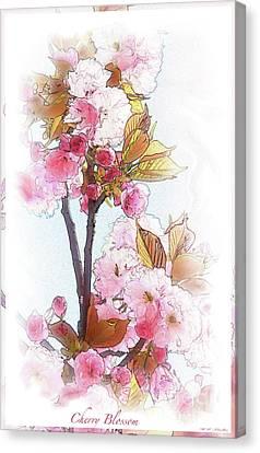 Cherry Blossom Canvas Print by Heinz G Mielke